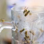 Likaiset astiat kannattaa kantaa pois pihalta, sillä ne vetävät ampiaisia puoleensa.