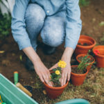 Jäykkäkouristusbakteeri voi vaania rokottamatonta esimerkiksi puutarhassa.