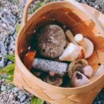 Poimi vain sieniä, jotka tunnistat varmasti ruokasieniksi.