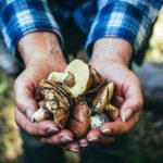 Sienimetsä voi olla hyvin voimaannuttava ympäristö.