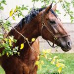 Tänään on kansainvälinen Eläinten päivä, josta alkaa myös 4.–10. lokakuuta vietettävä Eläinten viikko.